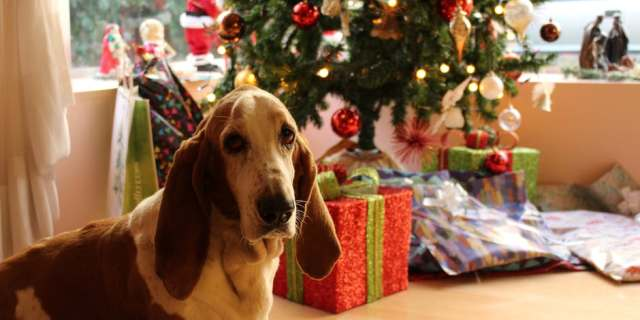 Destinos para pasar con tu perro la Navidad