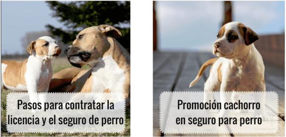 artículos del blog sobre mascotas