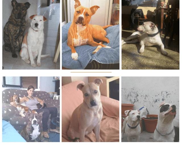 Diferentes tipos de canes