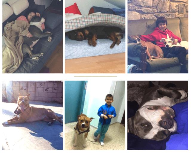 mascotas que se echan la siesta