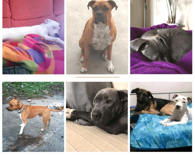 sueños caninos