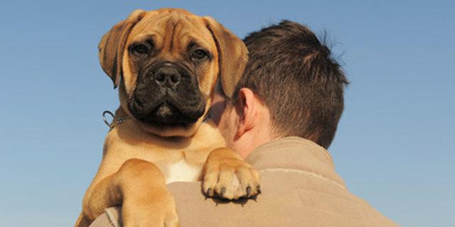 cuando poner vacunas a un cachorro