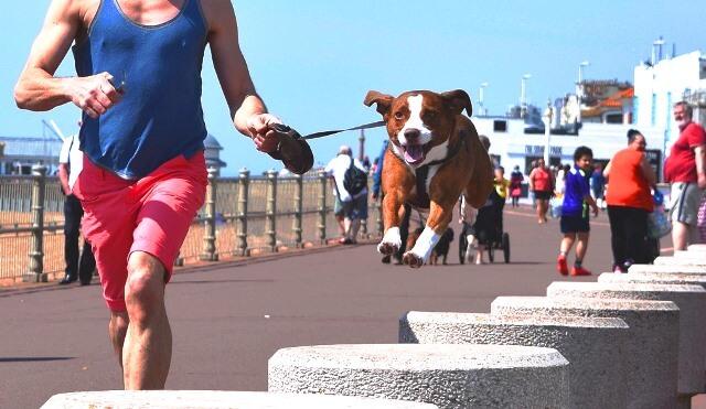 perro disfrutando paseo marítimo playa