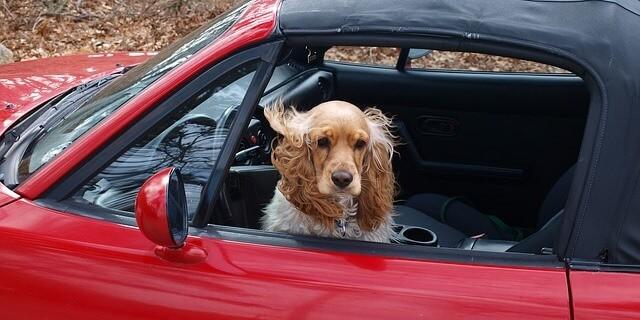 tu perro quiere irse de puente contigo