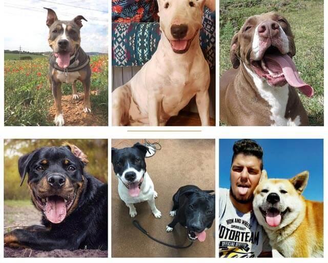 Perros considerados peligrosos