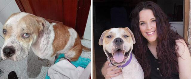 perro-abandonado-encuentra-familia