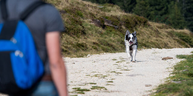 Mascota corriendo hacia su dueño