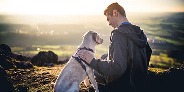 Aprendiendo de nuestros perros