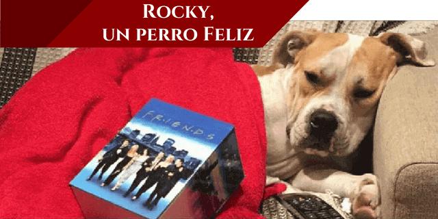 rocky es un perro feliz ahora
