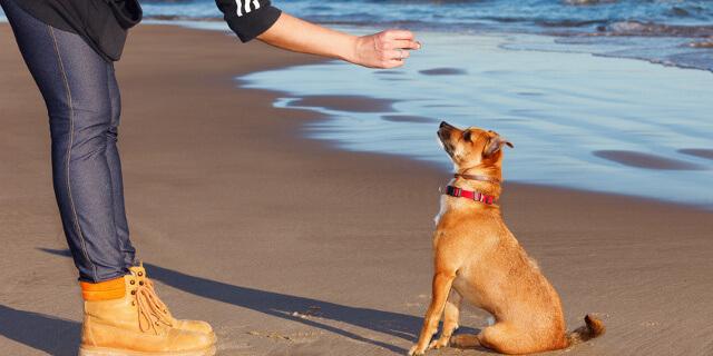 Las normas básicas para un pequeño perro.