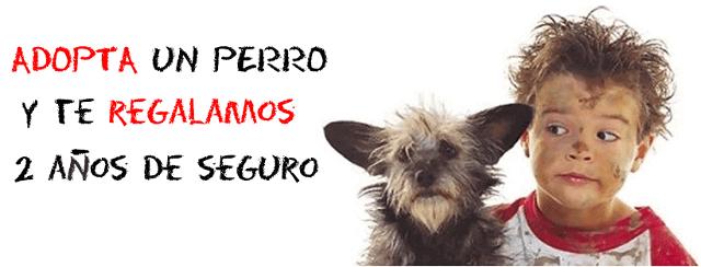 Oferta en el seguro si adoptas un perro