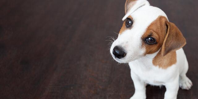 El cachorro depende de nosotros en su evolución.
