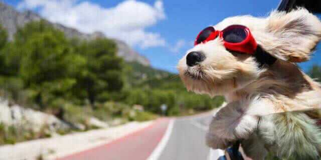 Perro viajando