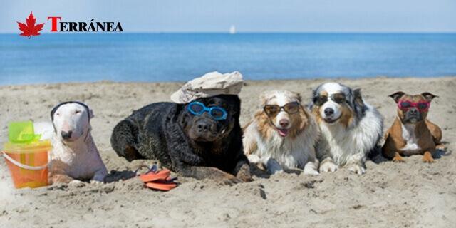perros disfrutando del sol y el mar