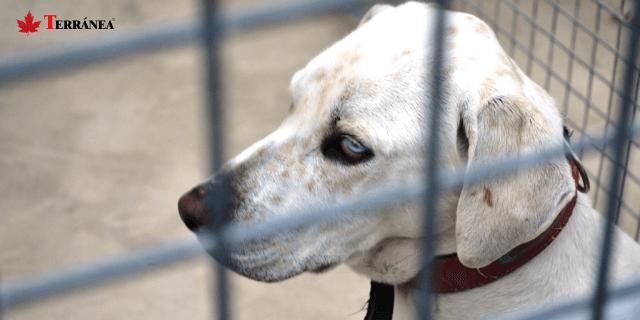 imagen de un perro metido en una jaula