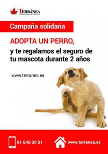 seguro perro gratis campana solidaria Terranea