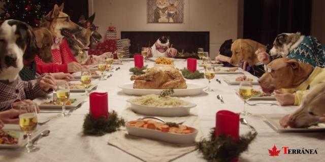 Existen alimentos que las mascotas no deberían de ingerir en ningún caso.