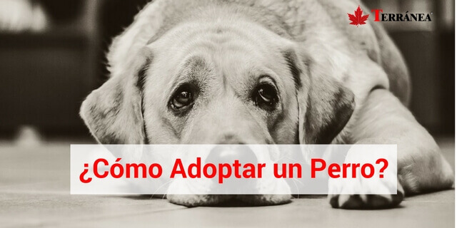 tramite-adoptar-un-perro