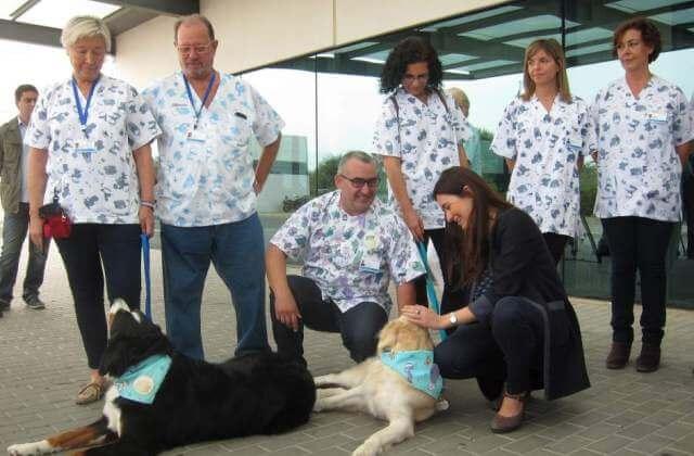 Todos los perros han recibido un estricto adiestramiento durante más de seis meses para tratar con los niños.