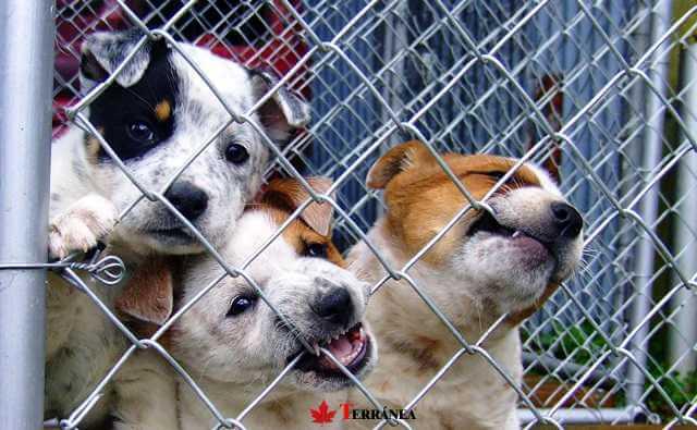 perros para adoptar en campana solidaria