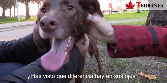 abandono-animal-perro-adoptado-feliz