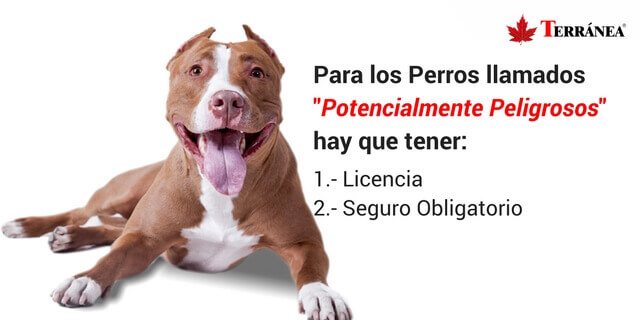 perro-licencia