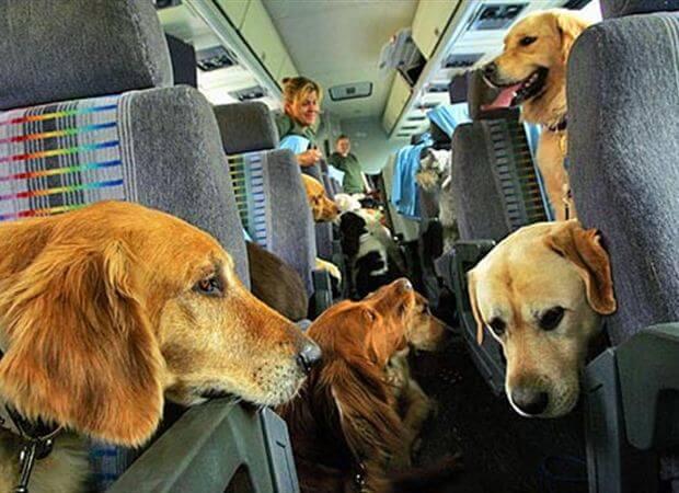 """El primer vuelo """"pet friendly"""" partió el pasado viernes 23 de enero desde el aeropuerto de Narita."""