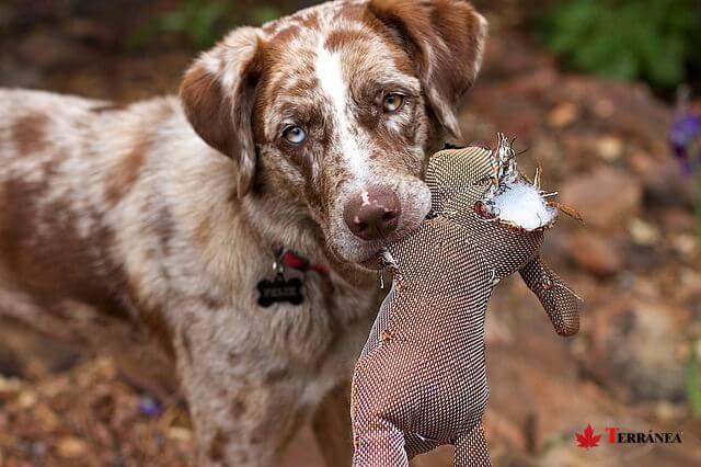 El juguete es una herramienta de lo más útil para enseñar a nuestras mascotas.