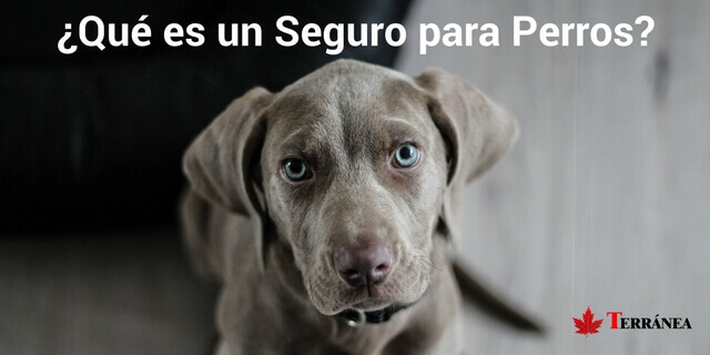 que es un seguro para perros