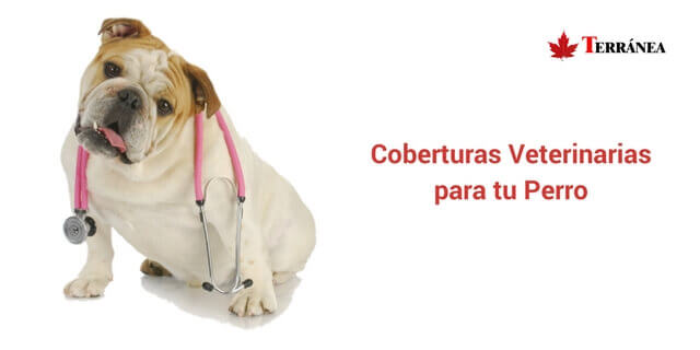asistencia veterinaria terranea