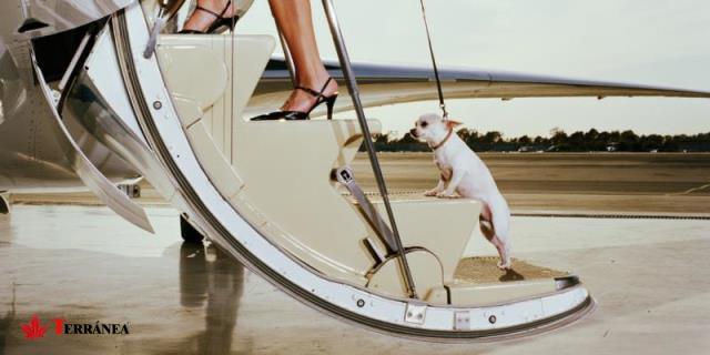 Hasta el momento las mascotas están obligadas a viajar en los compartimentos de carga.