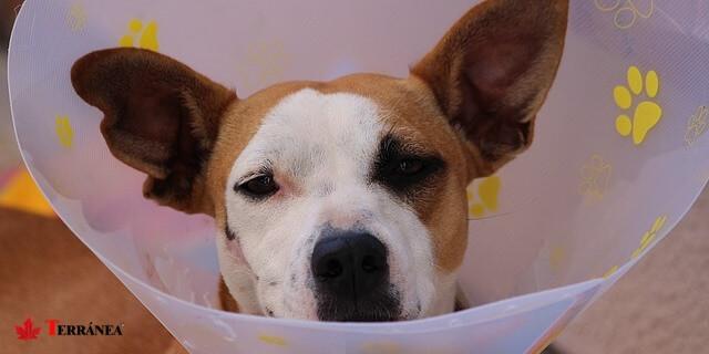 Existen dos tipos de seguros para perros que sus propietarios pueden emplear.
