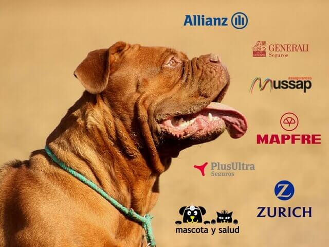 Compañías de Seguros Veterinarios para Perros