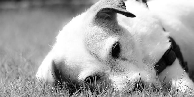 El acusado llevó a cabo amputaciones de rabos y orejas de decenas de perros.