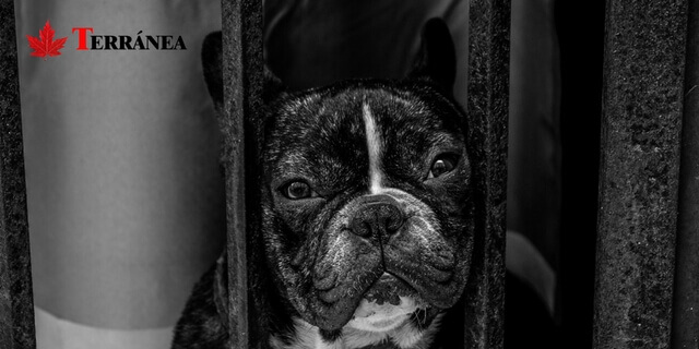 Perro enjaulado en perrera