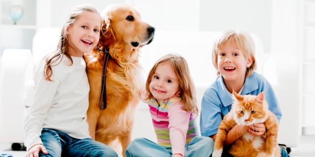 En España viven aproximadamente 20 millones de mascotas.