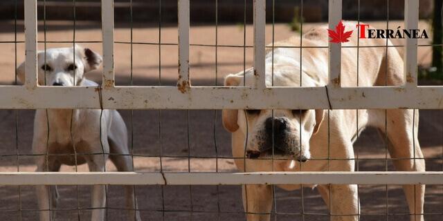 Perro en perrera municipal