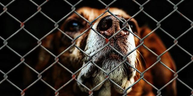 46 perros fueron rescatados de ser sacrificados en una granja de Corea del Sur.