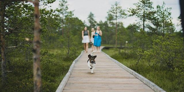 Es conveniente no perder de vista a nuestro perro en el paseo por el parque.