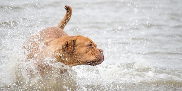 Los propietarios de mascotas contarán con un área reservada de 1.250 metros cuadrados.
