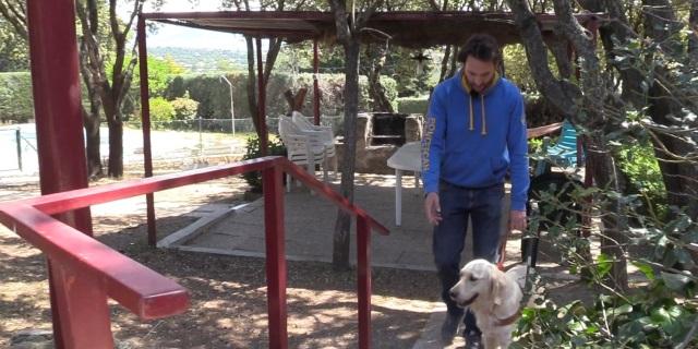 Perro de ayuda entrenando