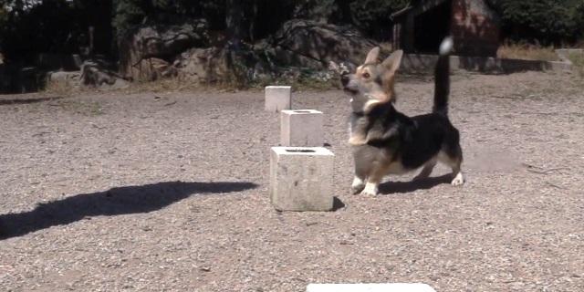 Perro entrenando para ayudar a diabéticos