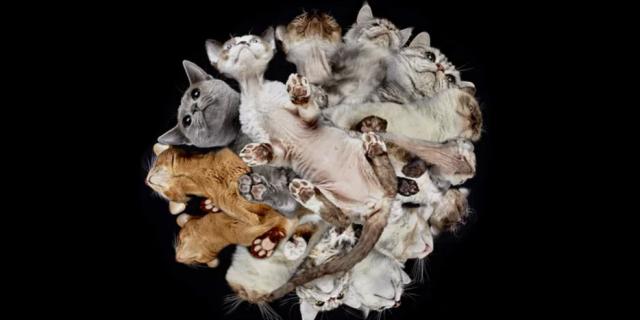 Underlook, el novedoso reportaje de Andrius Burba con perros y gatos (Foto: Underlook).