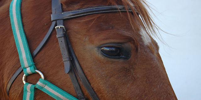 Detalle ojo caballo andaluz