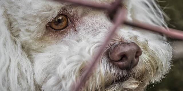 La iniciativa pretende garantizar que las mascotas no queden en situación de desamparo y abandono.