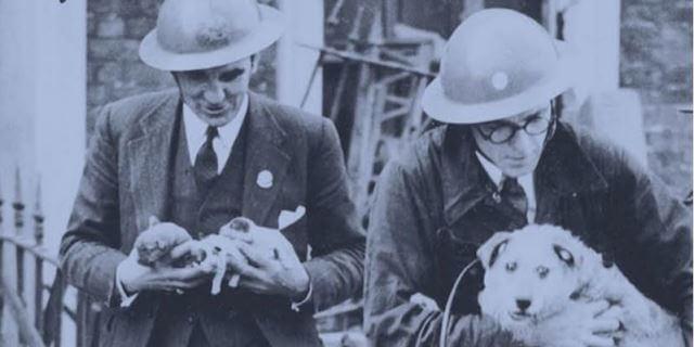 Más de 400.000 perros y gatos fueron sacrificados al comienzo de la guerra.