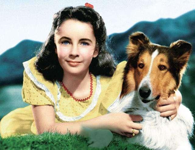 Lassie, junto a la joven Elizabeth Taylor.