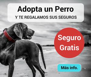 Perro y Seguro gratis por ser adoptado