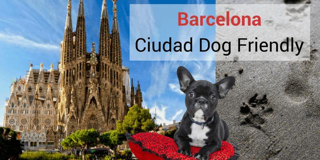 Barcelona acepta a los perros