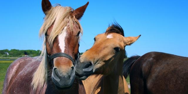 caballos domados en cuadra